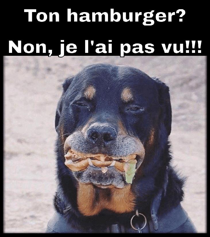 Ton hamburger Non,je l'ai pas vu !!!