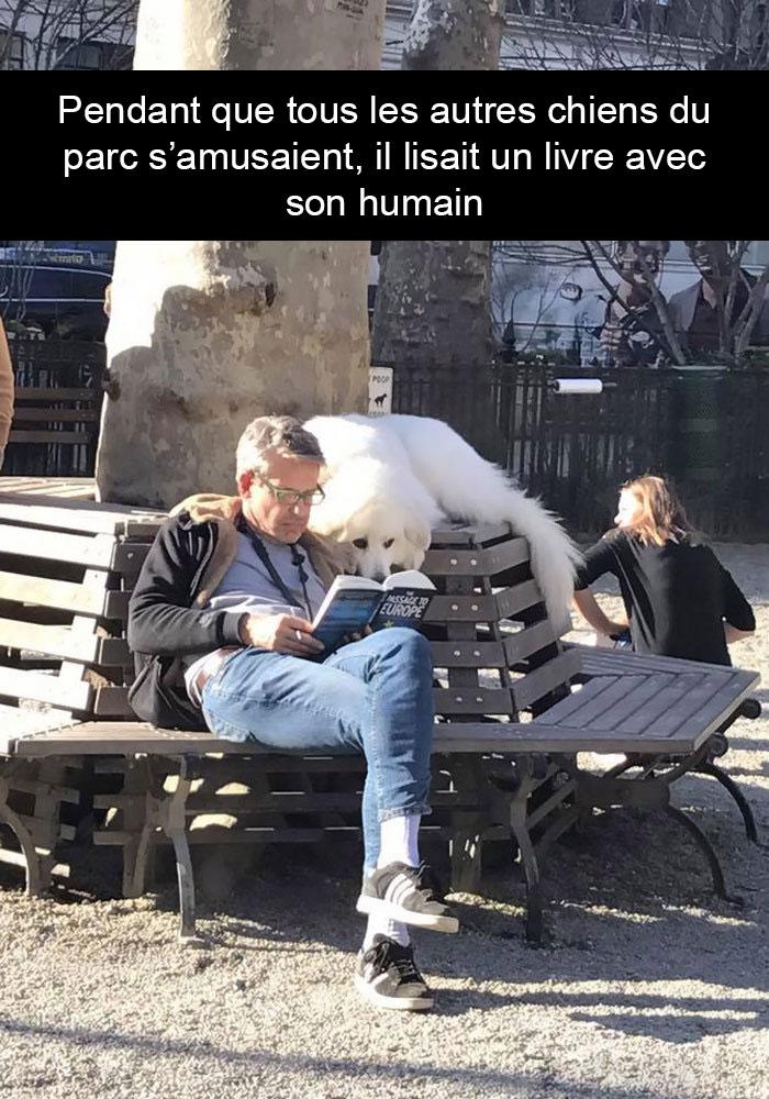 Pendant que tout les autres chiens du parc s'amusaient