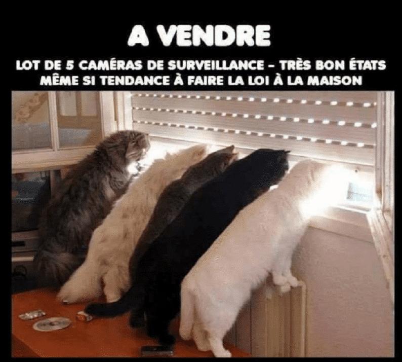 A-vendre.-Lot-de-5-cam%C3%A9ras-de-surveillance.png