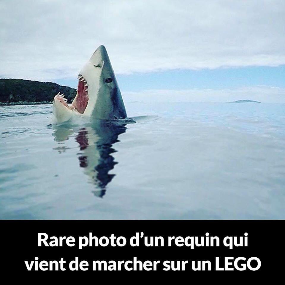 Rare photo d'un requin qui vient de marcher sur un lego