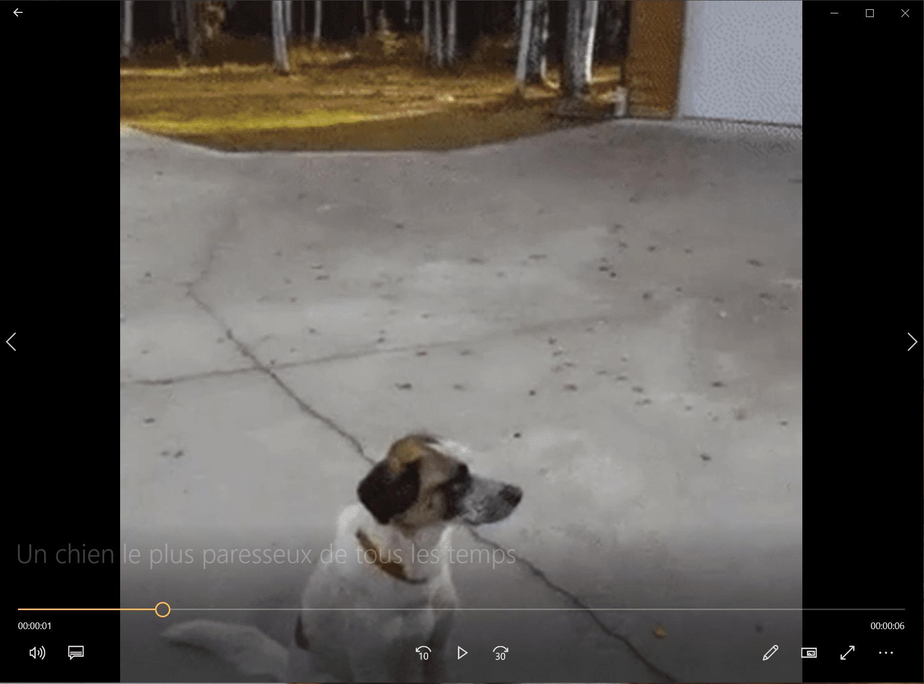 Un chien le plus paresseux de tous les temps