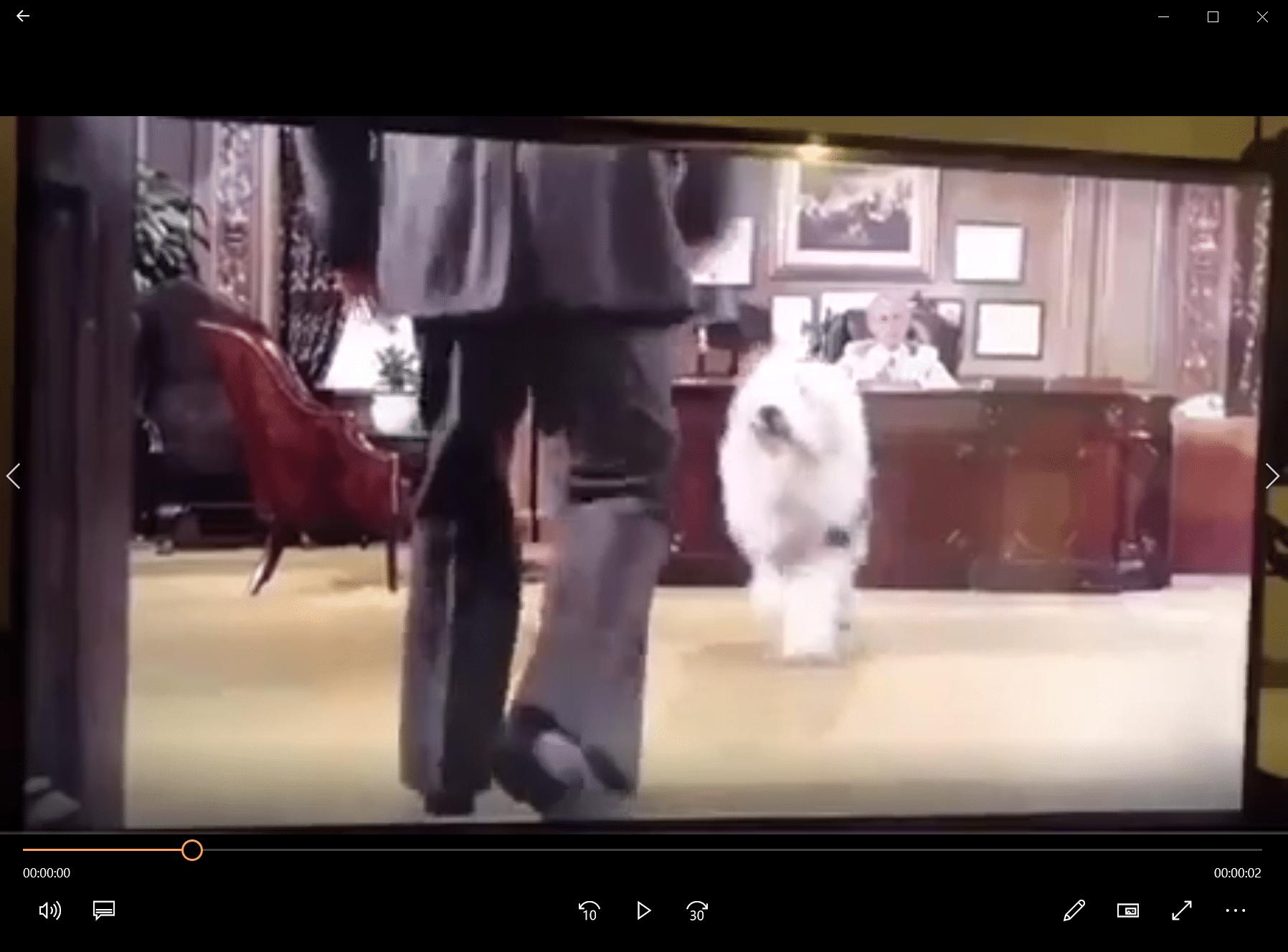 Quand ta pas nourri ton chien