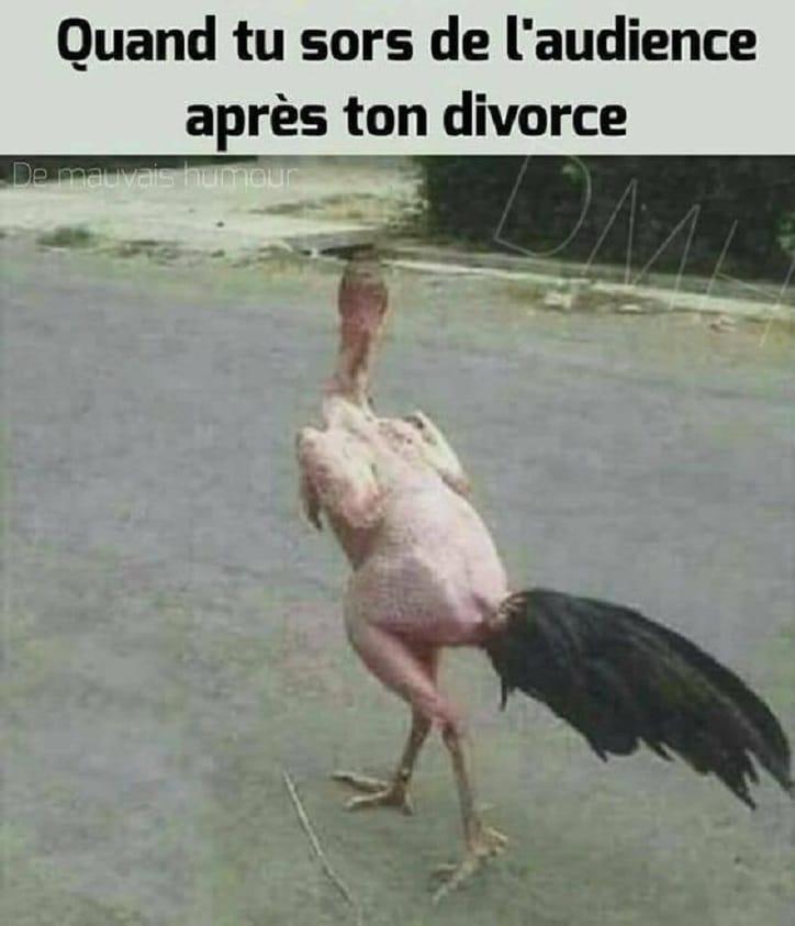 Quand tu sors de l'audience après ton divorce
