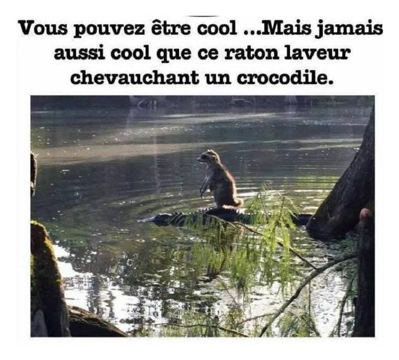 Vous pouvez être cool...
