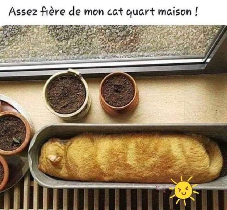 Assez fière de mon cat quart maison !