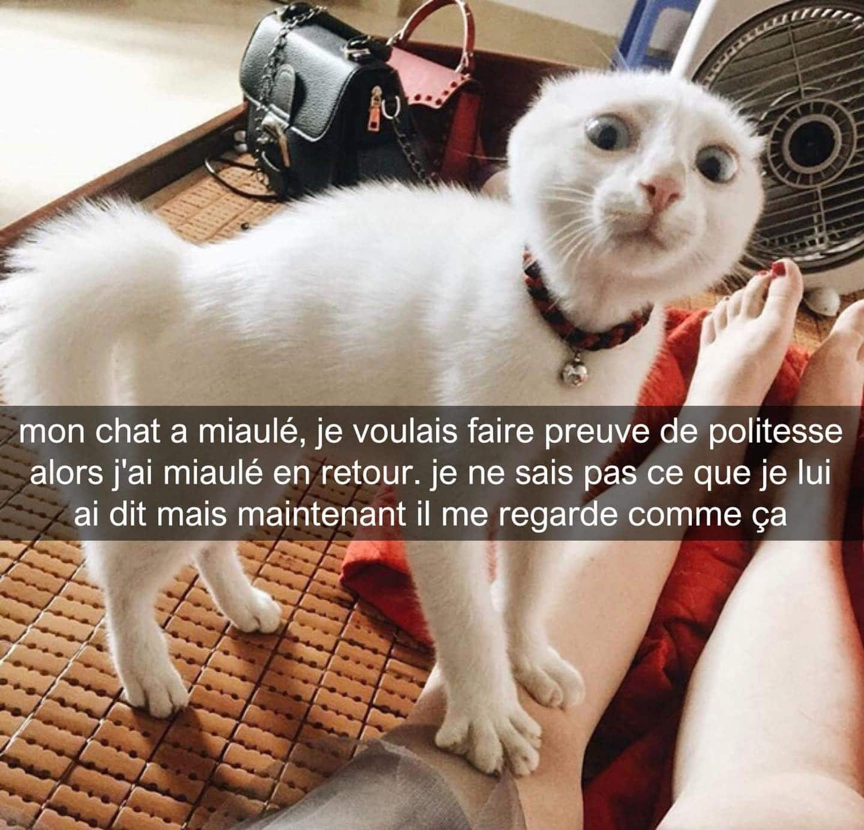 Mon chat a miaulé