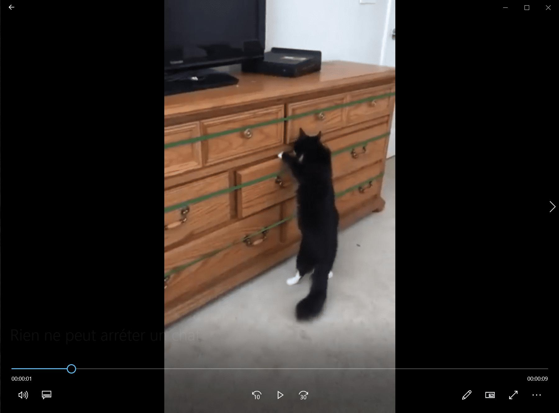 Rien ne peut arrêter un chat