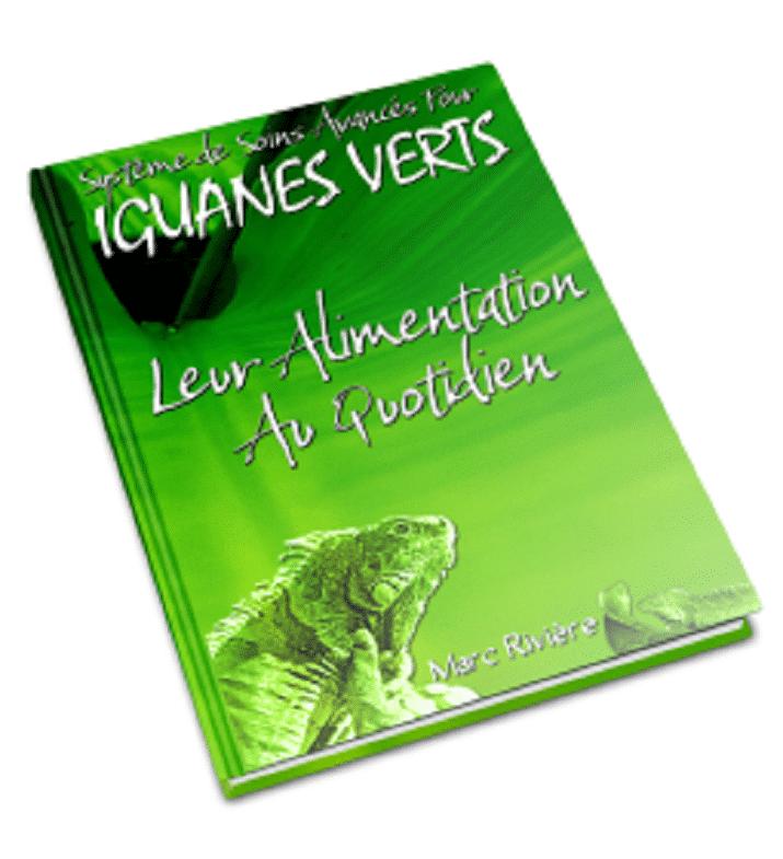 alimentation iguane