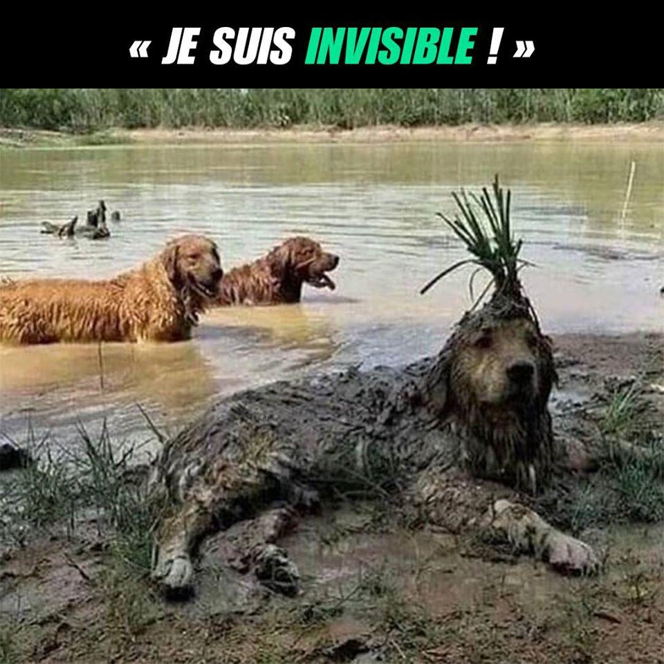 Je suis invisible !