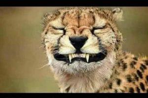 Quand au travail tu es obligé de sourire