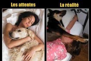 Dormir avec les animaux domestiques