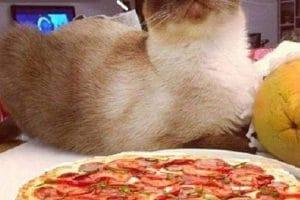 J'ai léché dans la pizza mais tu sais pas ou.