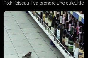 L'oiseau il va prendre une cuicuitte.